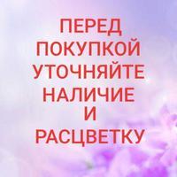 380955596716