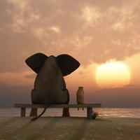 sloni ...