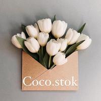 coco.stok