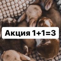 s_a_t_a_n_6_6_6_6